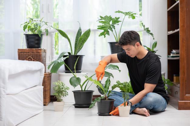 Pratique gramática em espanhol e aprenda sobre plantas